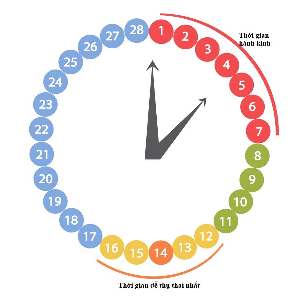 Cách tính ngày rụng trứng để sinh con trai dựa vào chu kỳ kinh nguyệt dành cho những bạn có kinh đều
